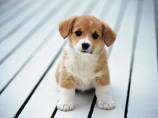 Puppy_2_kbhb4a