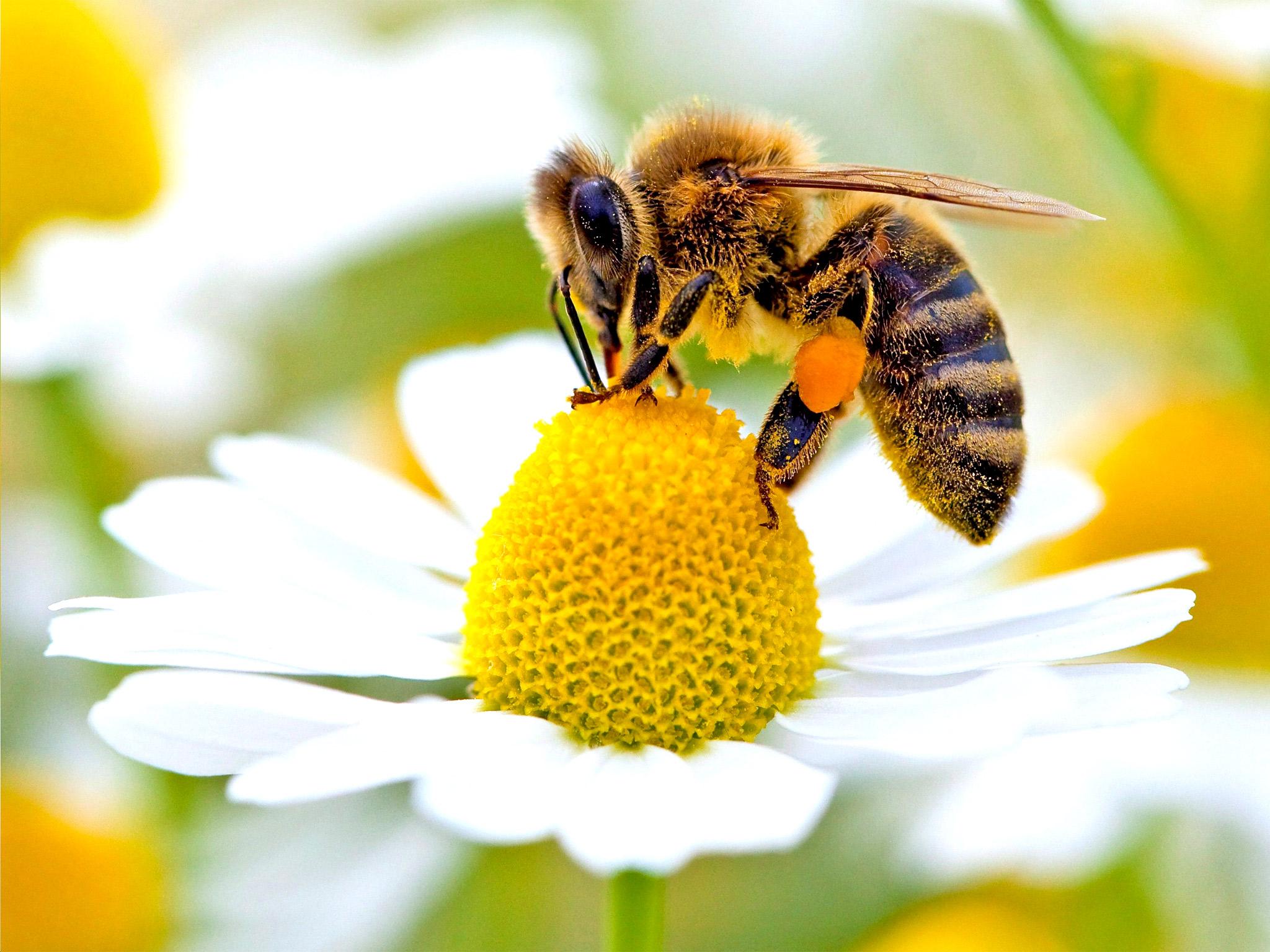 web-bees-epa